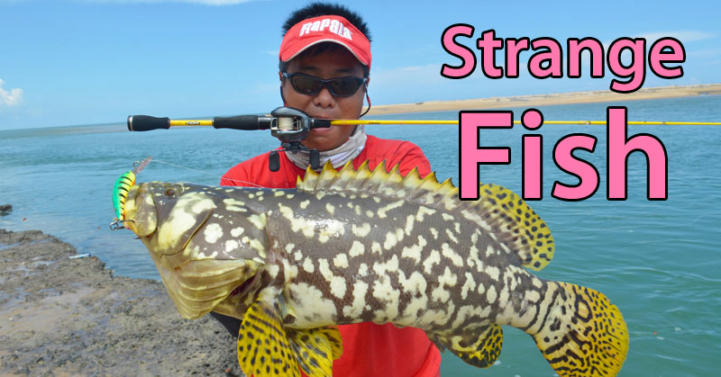 15 strangest fish ever caught in the history of mankind for The history of fish